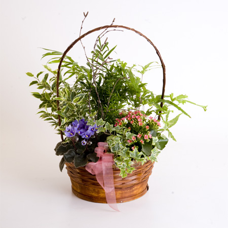 Indoor Planted Basket With a Selection of Green & Flowering Plants Reference: PL2