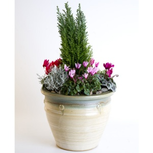 Seasonal Outdoor Planter Mixed Selection of Plants in a Glazed Pot Reference: PL3
